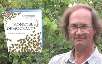 Professor Thomas D. Seeley Honeybee Democracy