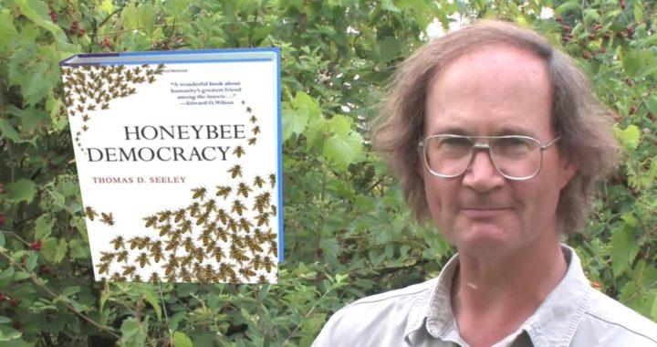 Professor Thomas D. Seeley Honeybee Democracy